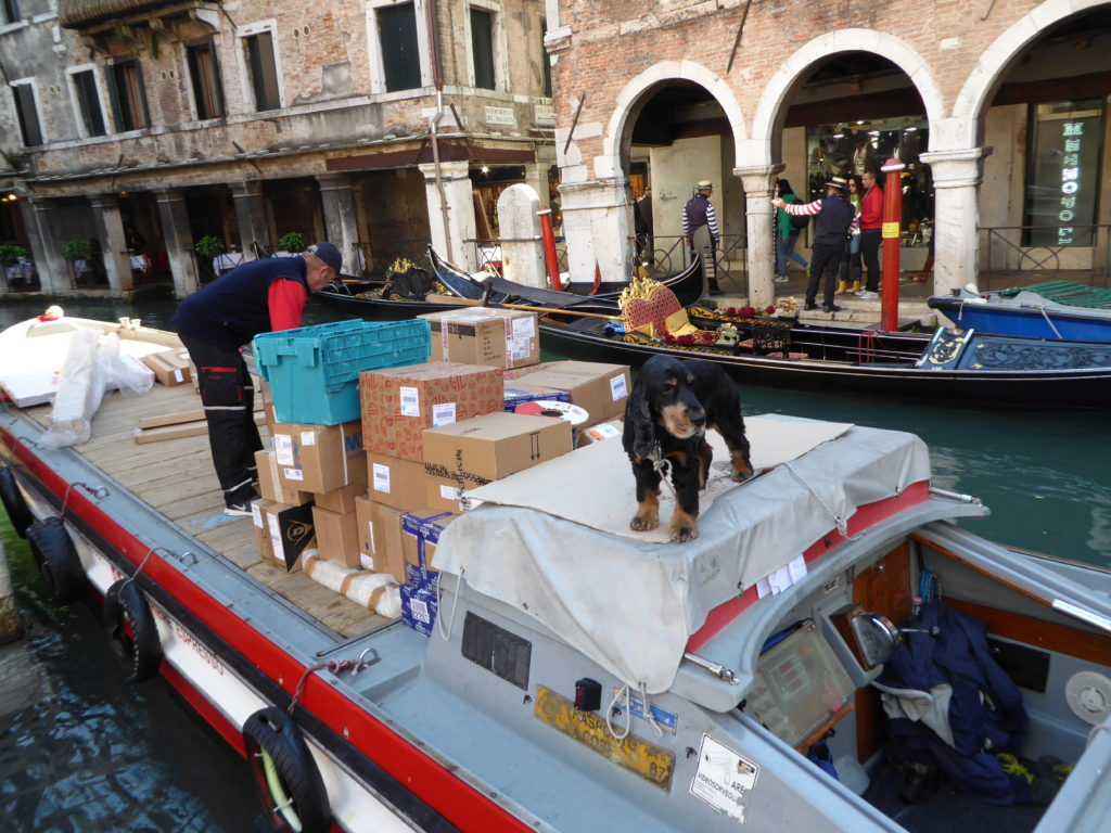 The Dog of Venice