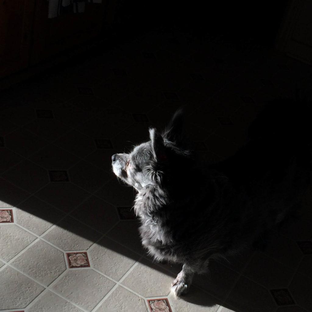 shoobie in the sunlight